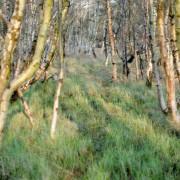 Baum und Buschwerk