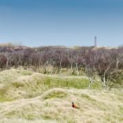 Fasan vor Leuchtturm auf Norderney