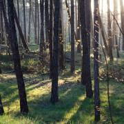 Wald auf Norderney